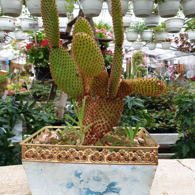 kaktus-i-retro-krukke